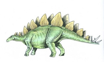 fun fact the stegosaurus is the official state fossil of colorado state symbols usa